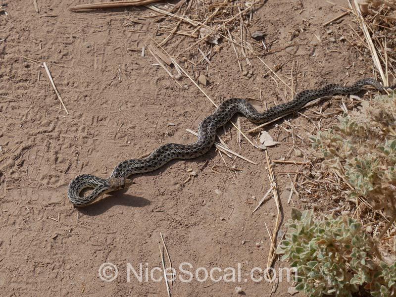 蛇@ラグーナハイキングコース