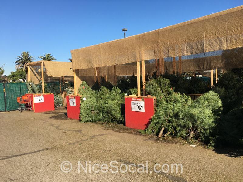 クリスマスツリー売り場